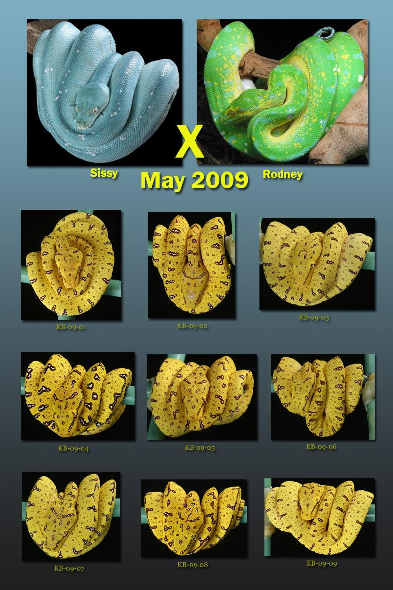 2009 Sissy x Rodney