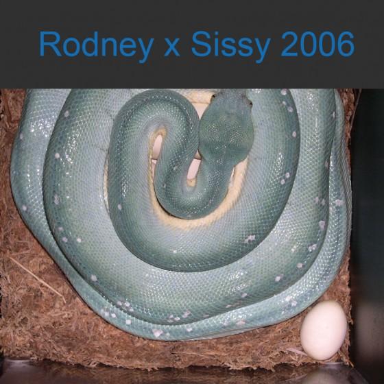 Rodney x Sissy